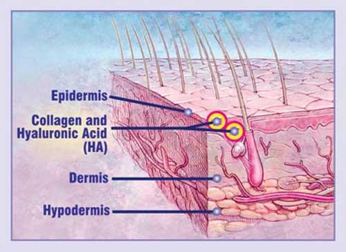 Hoạt dịch chất lỏng là thành phần giữ cho collagen ẩm và đàn hồi